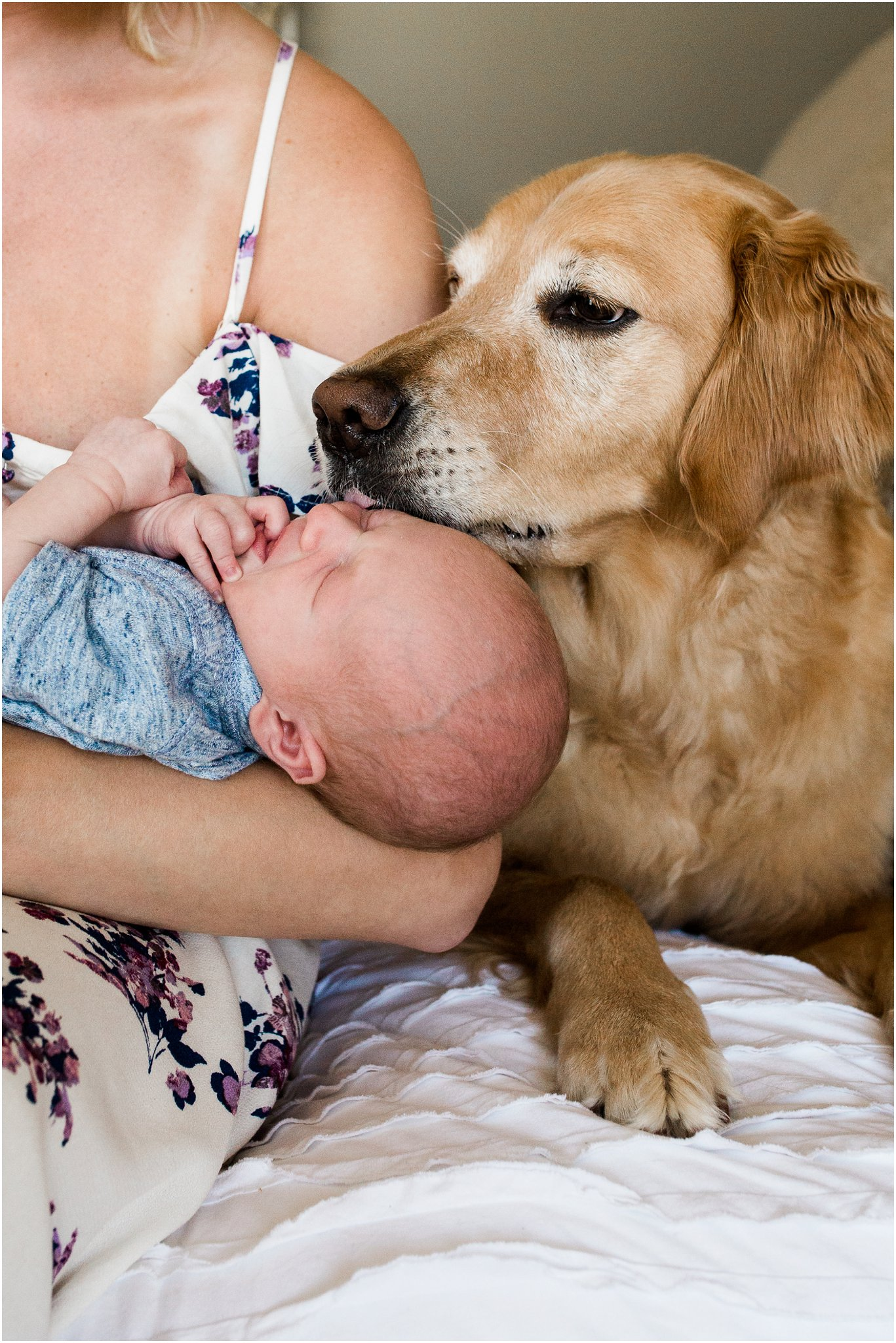 family dog with newborn baby boy in bedroom of pittsburgh home