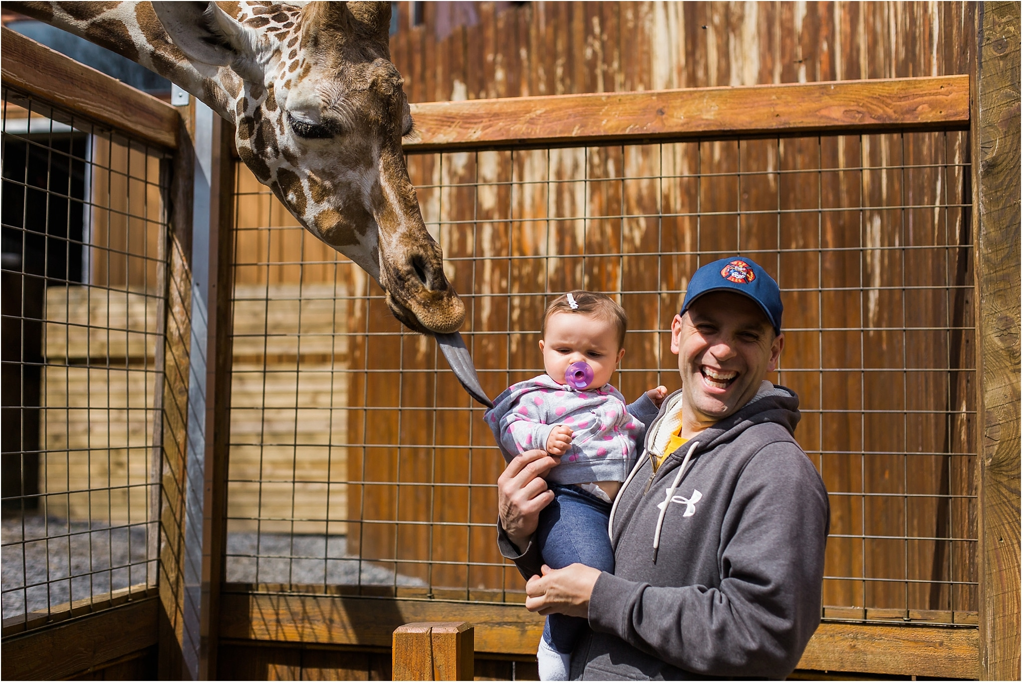 daddy and baby girl feeding a giraffe