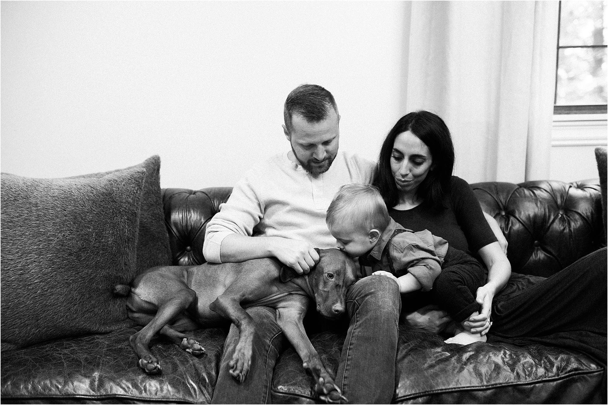 toddler kissing family dog