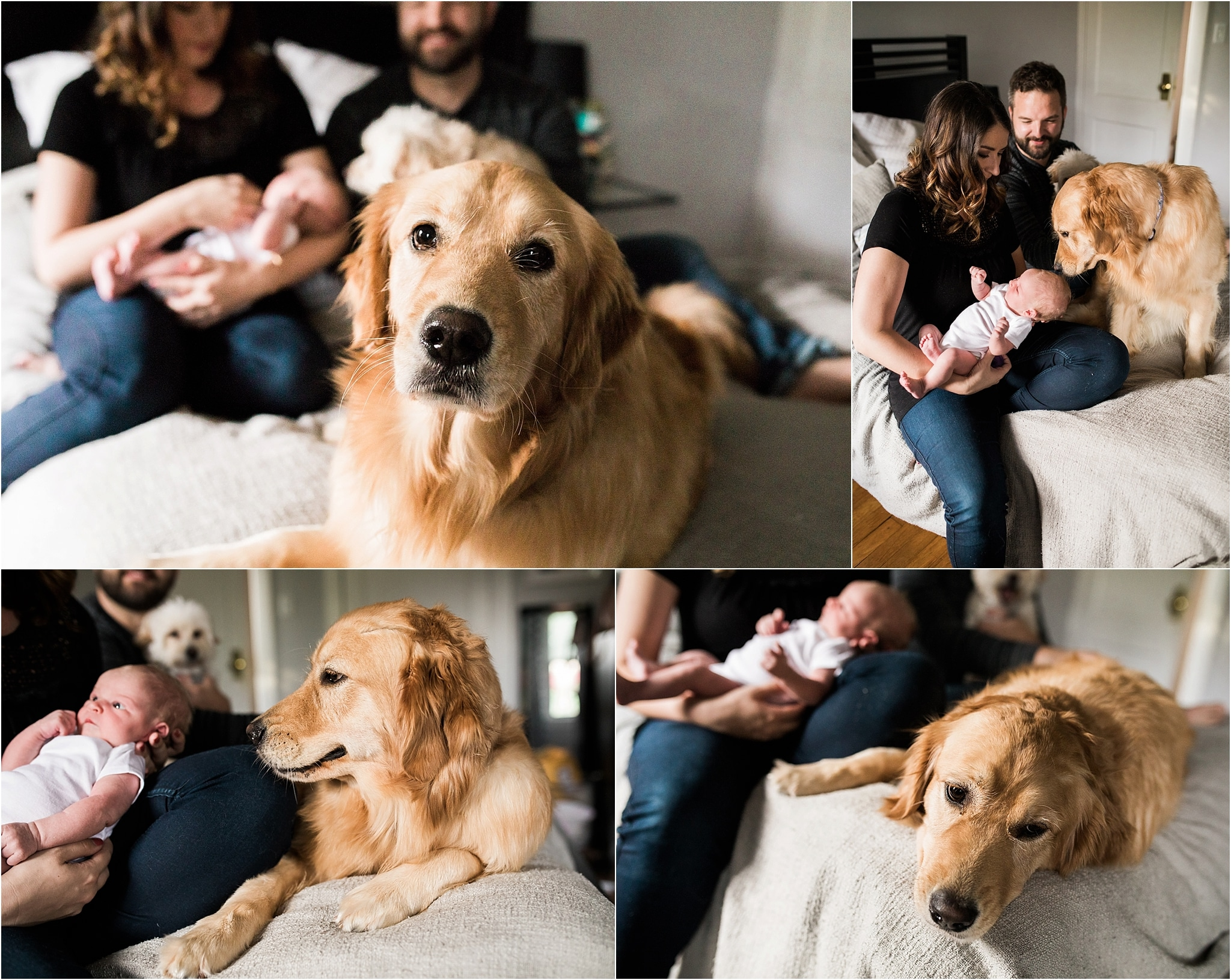 family dog photos with newborn baby