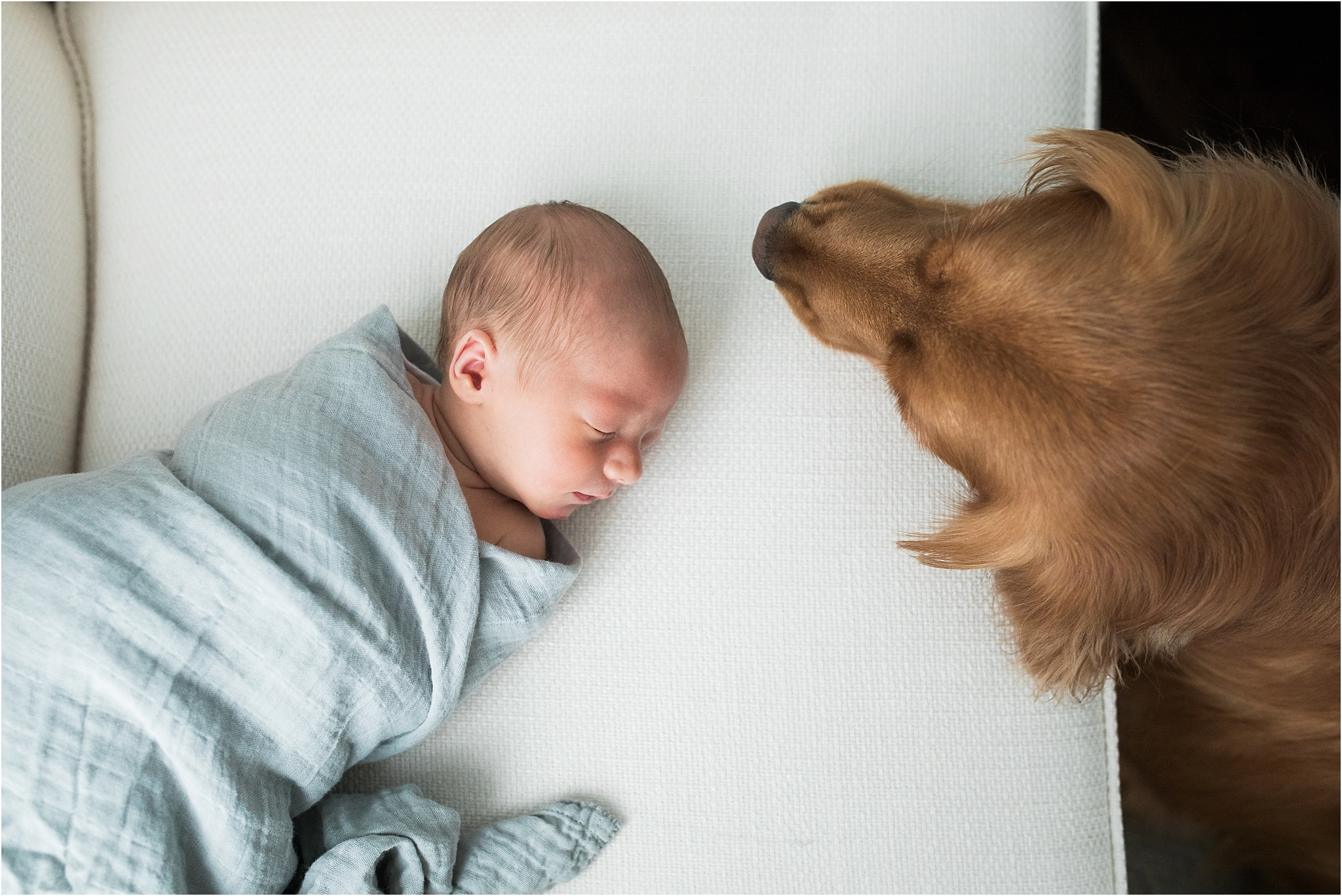 family golden retriever with newborn