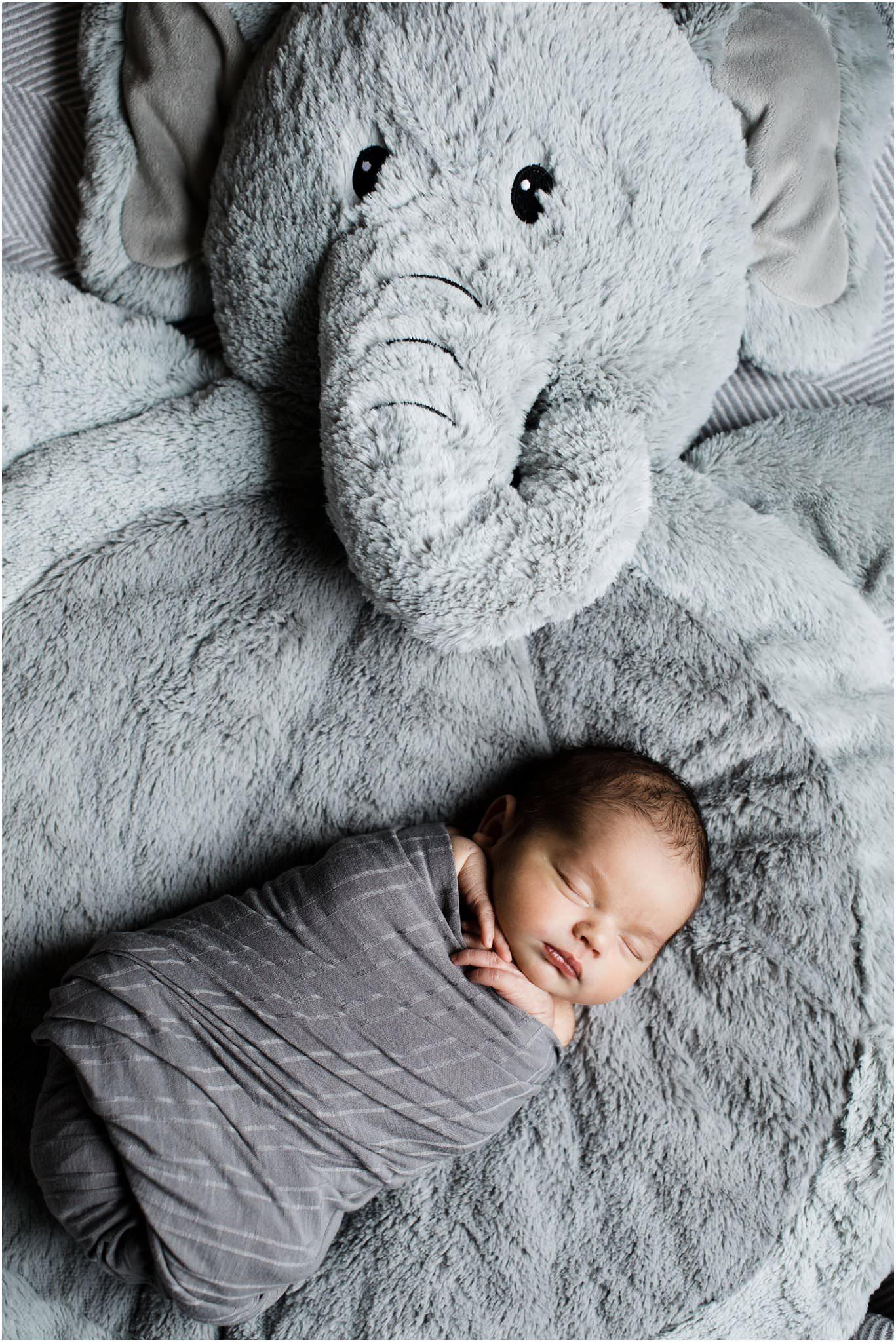 swaddled newborn baby on pottery barn elephant blanket