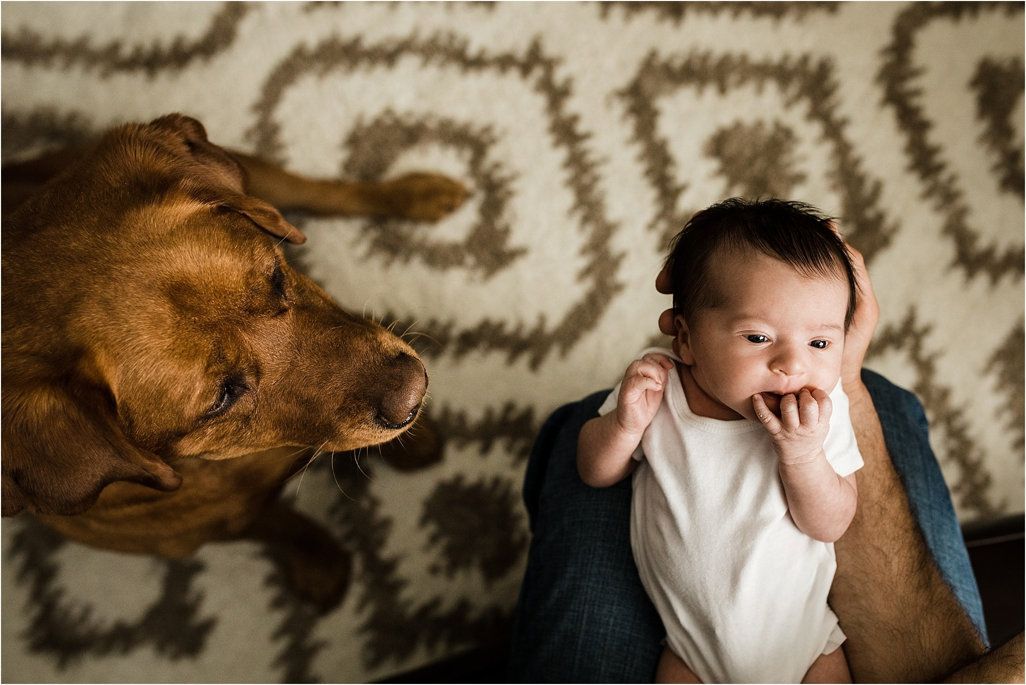 family fur baby looking at new baby