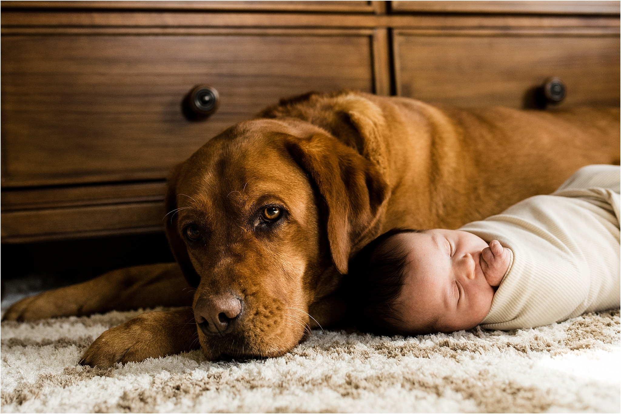 newborn photo with family dog